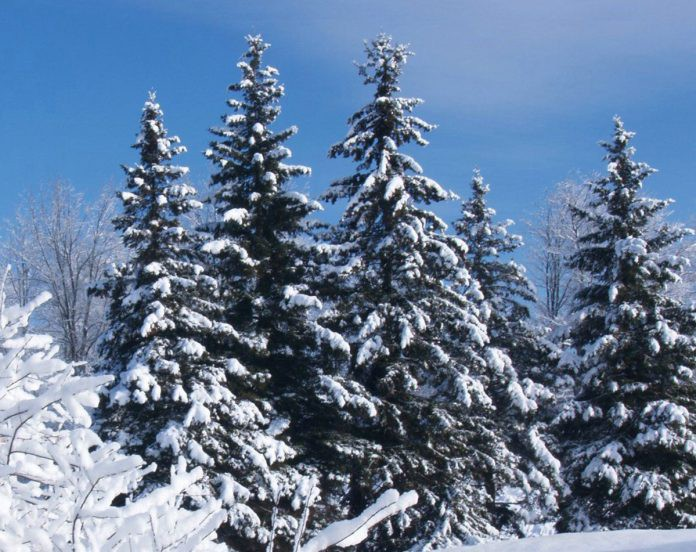 Какой праздник сегодня 18 декабря отмечают в России и мире, история, традиции, суть праздника