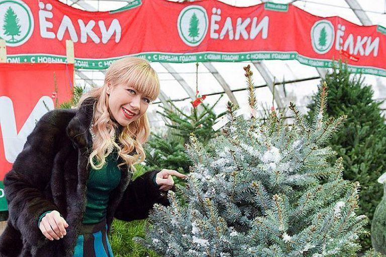 Сколько стоит в Москве живая ёлка — адреса базаров