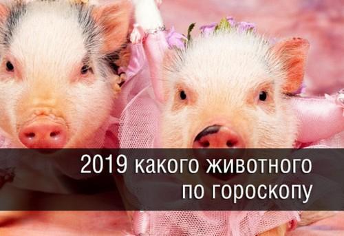 Новый 2019 год какого животного: какой будет для всех знаков зодиака, характеристика 2019 года, финансы, карьера