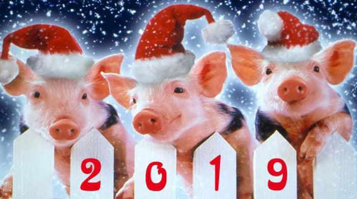 Что готовит 2019 год Свиньи каждому знаку Зодиака