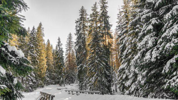 Православный календарь на 24, 25 и 26 декабрь 2018: на этой неделе у Католиков Рождество Христово