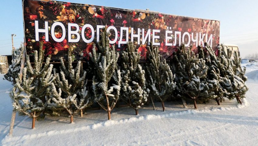 Елочные базары в Москве 2018 — когда откроют, адреса и цены