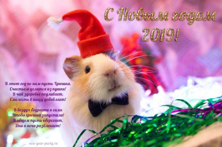 Официальные поздравления с Новым 2019 годом коллегам по работе