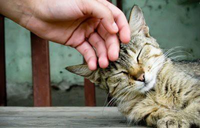 Британка погладила бездомную кошку и оказалась парализована