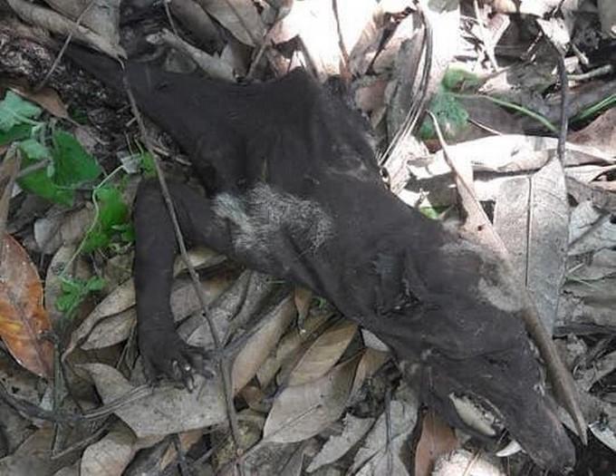 Останки неизвестного существа напугали жителей Колумбии