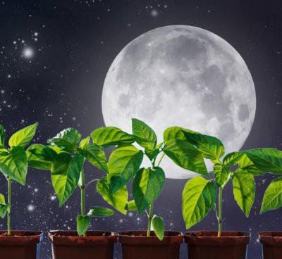 Астрологи составили лунный посевной календарь огородника на февраль-2019