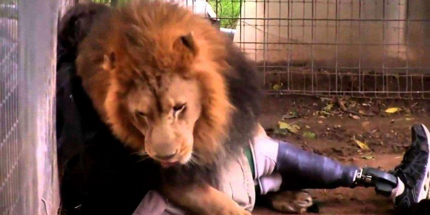 Лев растерзал работника одного американского зоопарка