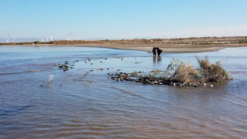 Над разломом Сан-Андреас почему-то массово гибнут птицы