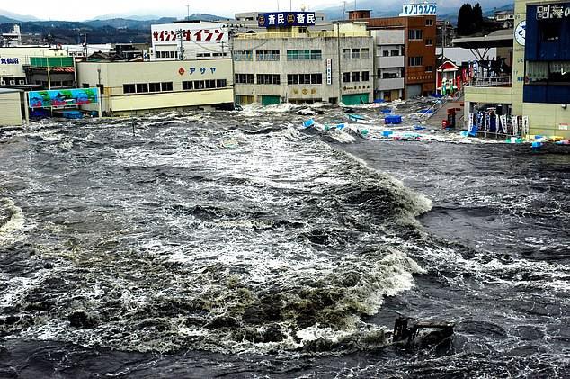 Японцы боятся скорого цунами из-за появления сельдяных королей