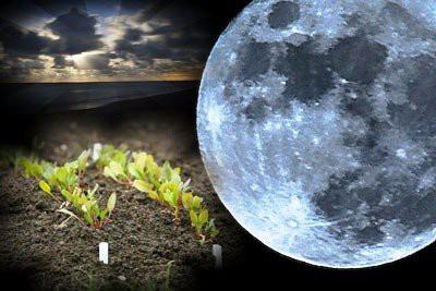 Лунный посевной календарь на февраль 2019 года для садовода и огородника: благоприятные дни
