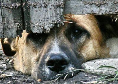 В Алматы живодер заживо содрал с щенка кожу