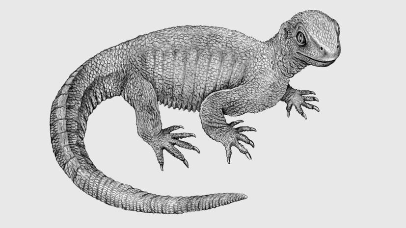 Раком болели даже доисторические рептилии