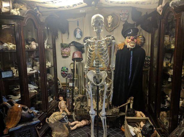 Британец продает в своем магазине детские скелеты, части тел и куски плоти человека