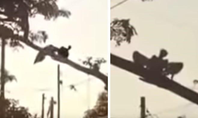 Жуткое крылатое существо сняли на видео в Никарагуа