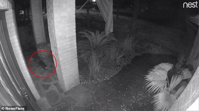 Черная кошка шла по двору и вдруг растворилась в воздухе