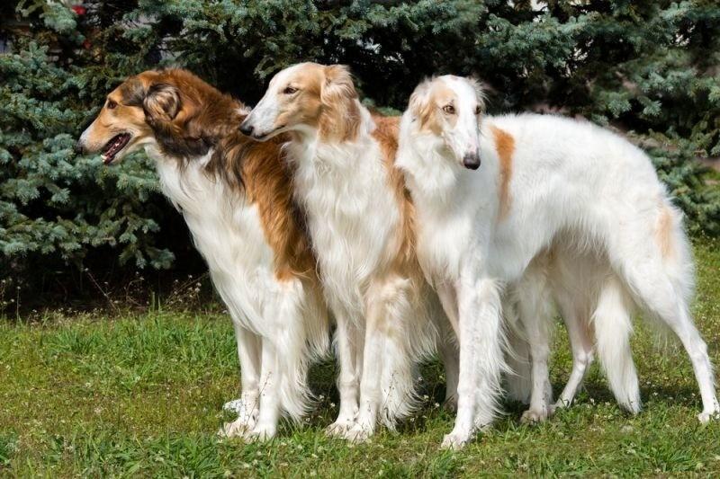 Породы собак, идеально подходящие для разных знаков зодиака