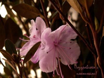 Календарь. День в истории: 7 апреля – праздники, события, именины