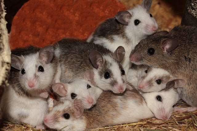 Мыши в невесомости ведут себя очень необычно