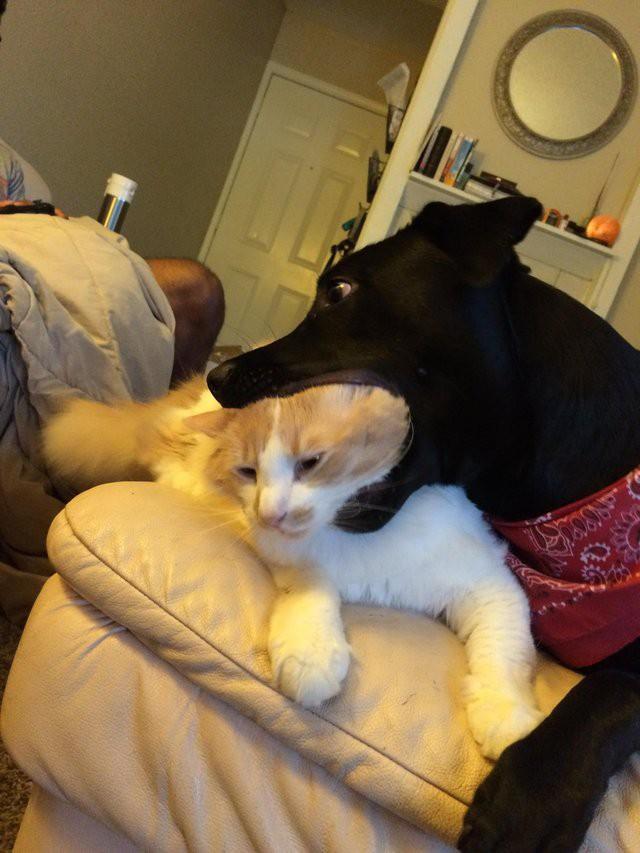 15 фотографий самых наглых котов и собак. Часть-2