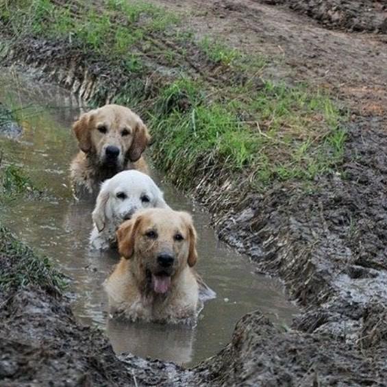 15 самых забавных собак, которые поднимут ваше настроение своими выходками