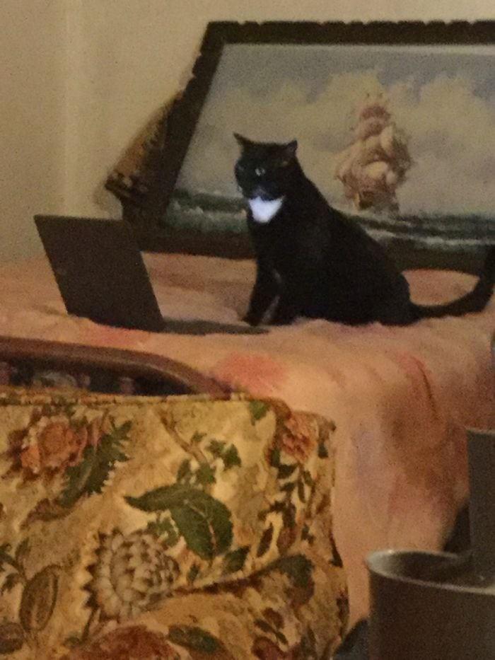 15 фотографий, которые доказывают, что коты — настоящие хозяева жизни