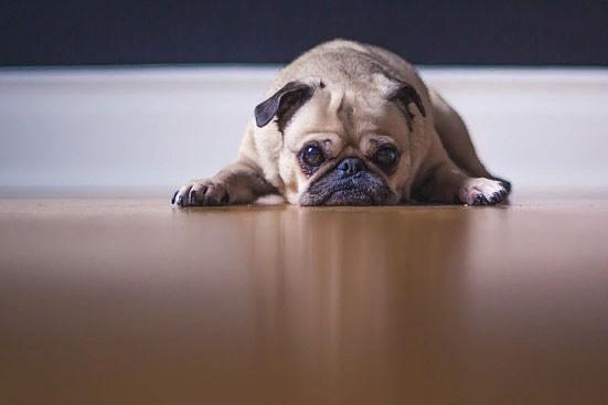 Ипотека: 10 важных ипотечных вопросов, которые нужно знать до её оформления