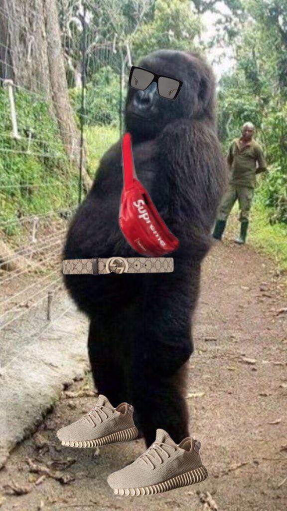 Две гориллы сделали селфи со своим другом-человеком и стали звездами соцсетей