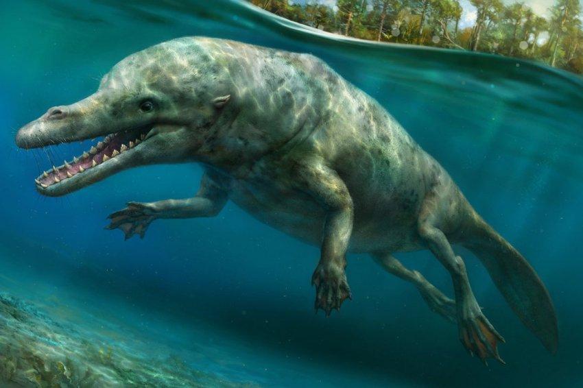 В Перу откопали останки удивительного ходячего кита - НЛО, инопланетяне, мистика, тайны, загадки, монстры, чупакабра, последние новости, фото и видео