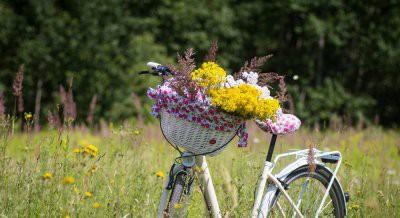 Какие лекарственные травы собирают в мае: перечень растений