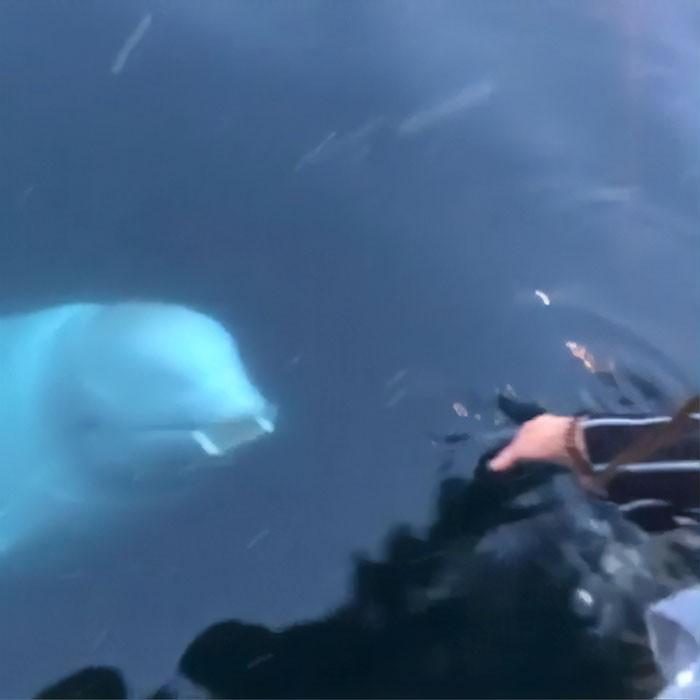 Кит-«шпион» из России вернул телефон жительнице Норвегии, который та уронила в море