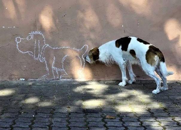 11 фотографий собак, которые не устают смешить владельцев своими выходками