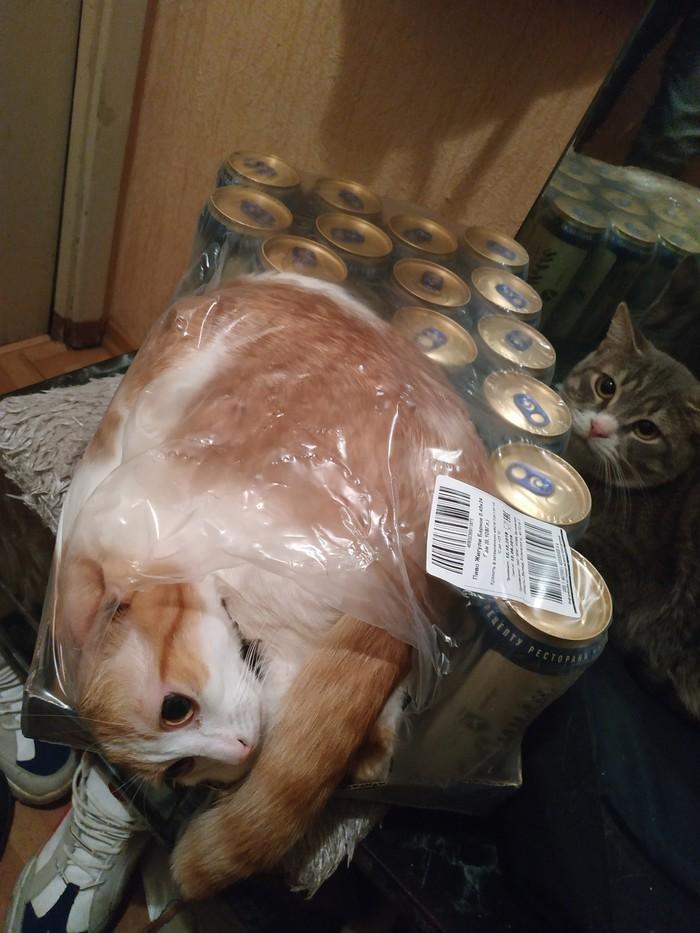 11 фотографий, доказывающих, что коты — это жидкость