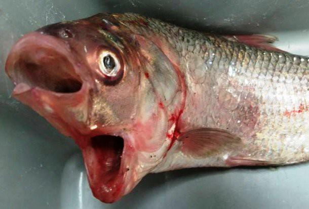 10 фотографий самых удивительных животных-мутантов
