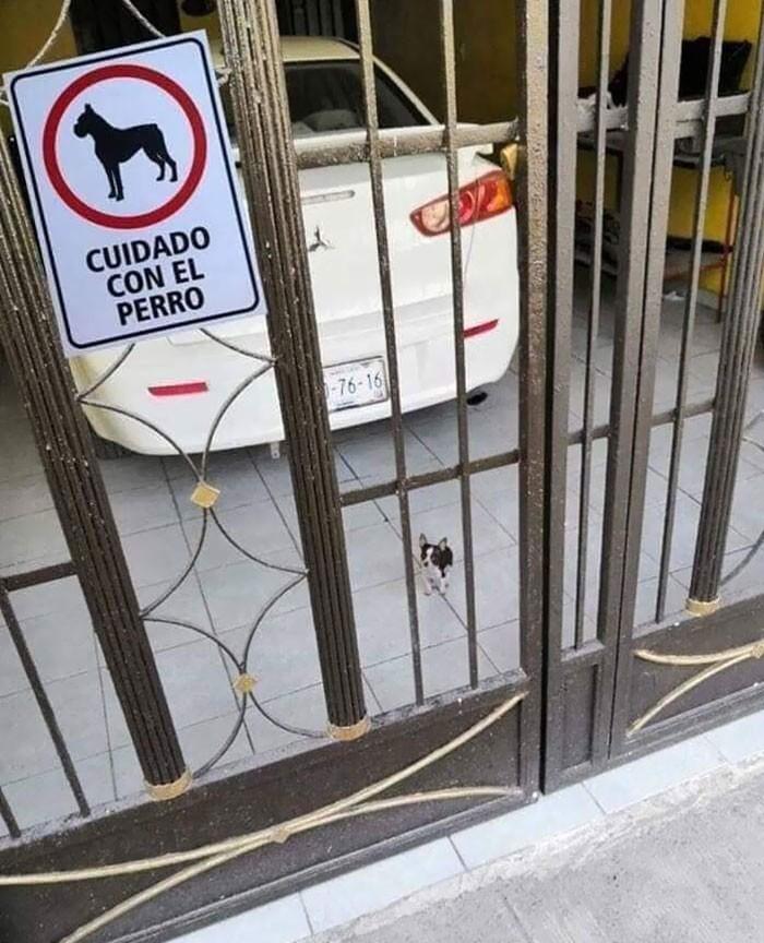 10 ну просто зверски злых собак, которых не предупредили, что им нужно быть грозными
