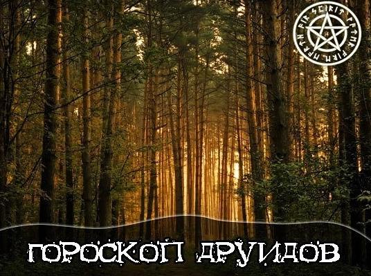 Гороскоп друидов: описание человека-Яблони