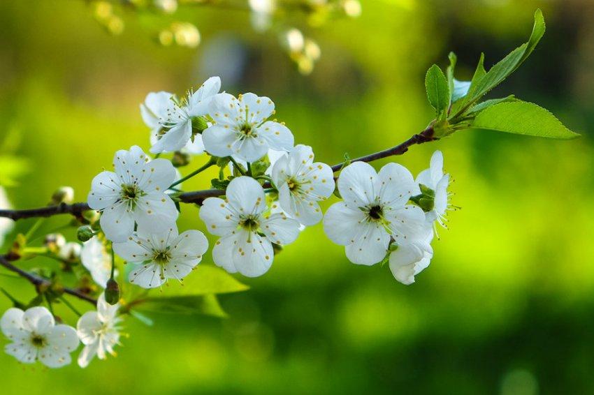 Прогноз на любовь с 11 по 20 мая для Близнецов, Весов и Водолеев на картах Таро