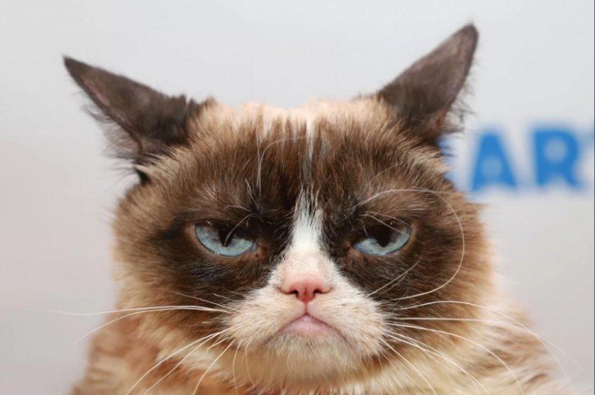 Известный в Сети «сварливый кот» умер в возрасте 7 лет