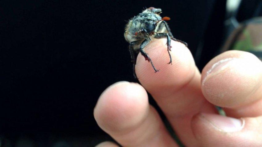 Ученые обнаружили червей, превращающих насекомых в зомби