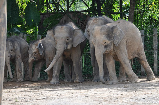 5 самых нелепых и жутких нападений животных на людей