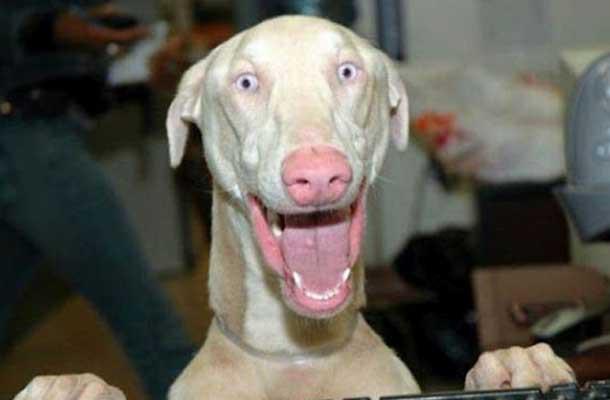 10 фотографий животных, делающих смешные морды