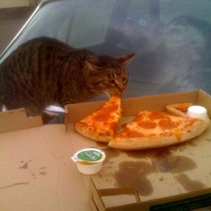 Найдено объяснение, почему некоторые кошки одержимы поеданием хлеба
