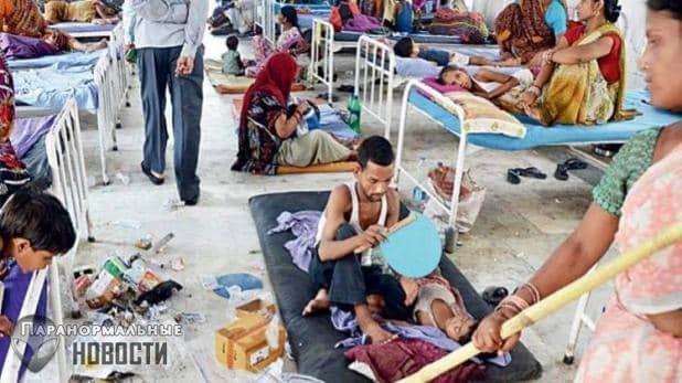 В Индии за 10 дней умерли 53 ребенка, которые заболели из-за... фруктов личи
