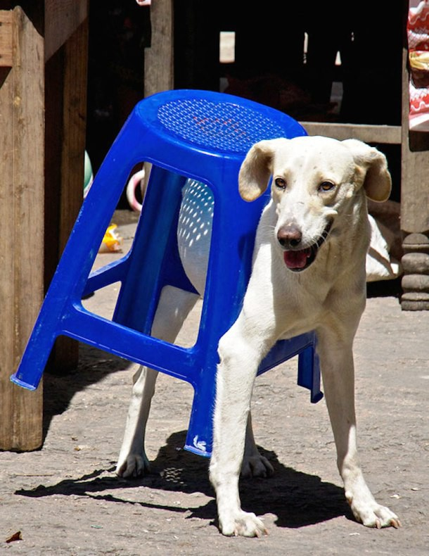 10 фото собак и кошек, которые сожалеют об использовании человеческой мебели