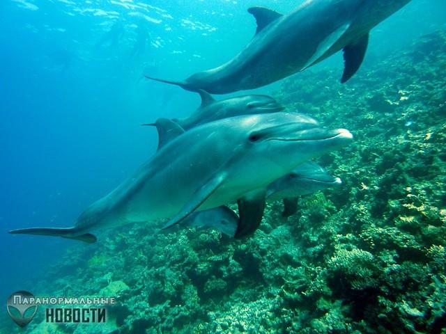 Загадочные случаи, когда дельфины спасали людей от акул