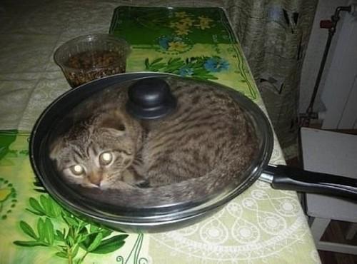 10 смешных фото котов, застрявших в вещах