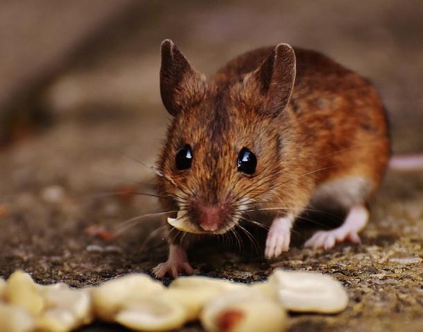 ТОП-5 самых умных животных, о высоком интеллекте которых вы и не догадывались