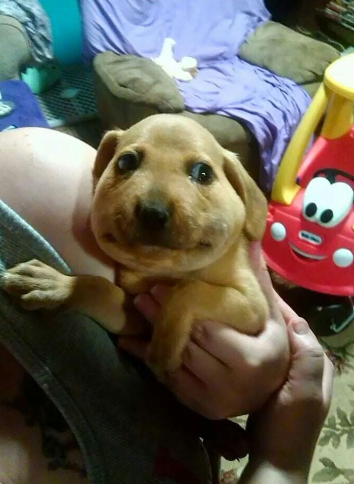 10 фото собак, которых только что ужалили пчелы, и от этого они стали очень смешными