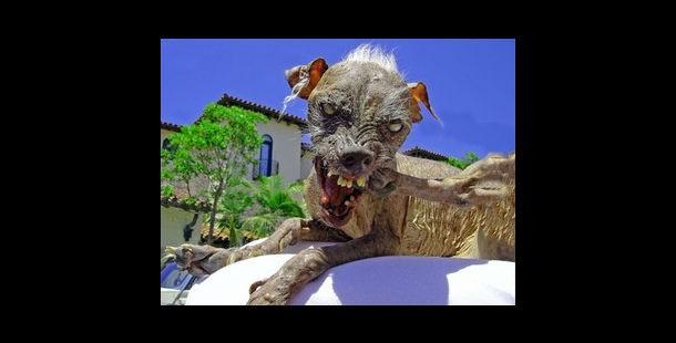 10 фото самых некрасивых собак, которых вы когда-либо видели