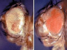 Эпигенетика: невидимый генетический отпечаток