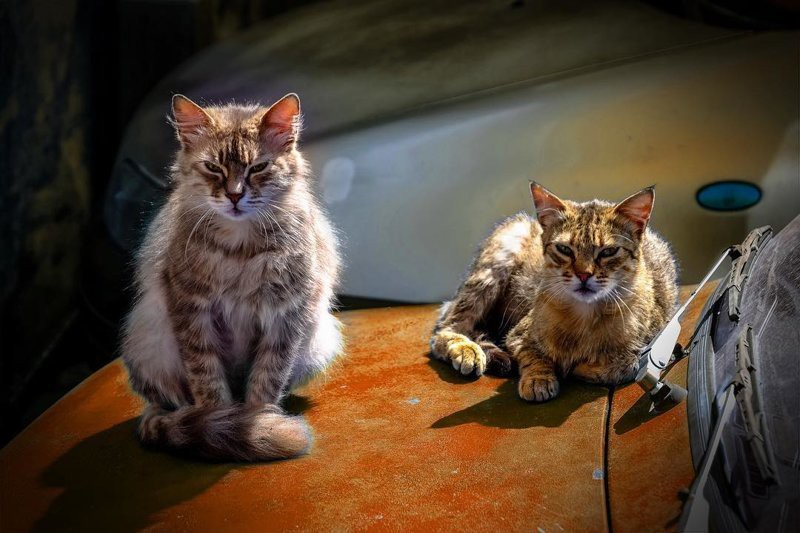 10 фото действительно опасных котов